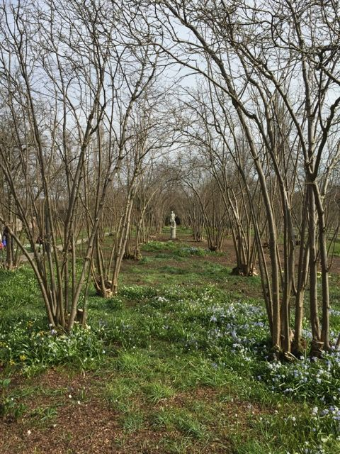 The nuttery at Sissinghurst with hazels that have been coppiced - reminder to do this with mine!