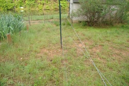 240 best images about deer proof garden on pinterest for How to keep deer out of garden fishing line