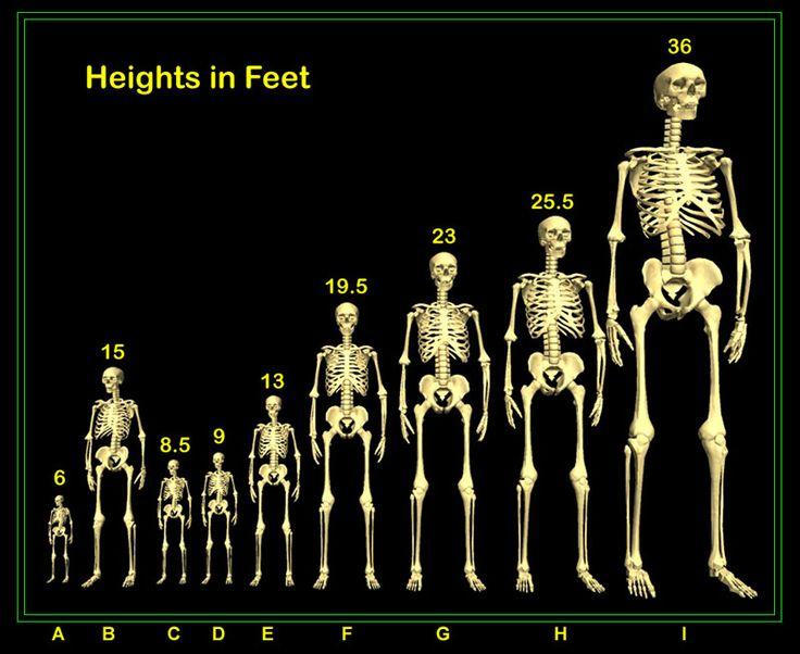 90 best nephilim images on pinterest | giant skeleton, ancient, Skeleton