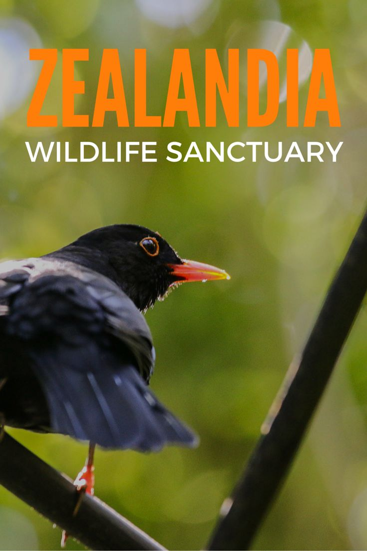 A visit to Wellington's unique Zealandia wildlife sanctuary, New Zealand. A conservation project that creates a safe haven for rare native and endemic species.