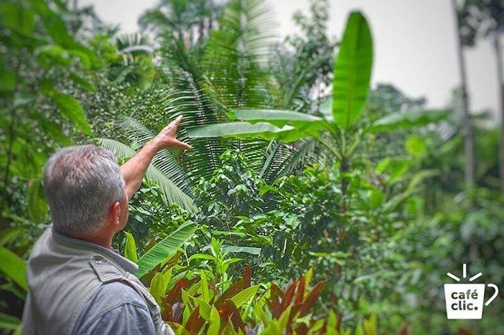 Spyka Mogambo de Viotá, Cundinamarca es el café de la biodiversidad. Su taza, es la expresión de un cultivo que crece junto a 2500 especies diferentes de maravillosas plantas nativas colombianas. Cultivado bajo la sombra de los principales árboles madereros y producido a través de tecnologías agrícolas que son muy amigables con el medio ambiente. Spyka Mogambo te ofrece un café 100% orgánico y 100% extraordinario… Aprende más: www.cafeclic.com/products/cafe-mogambo