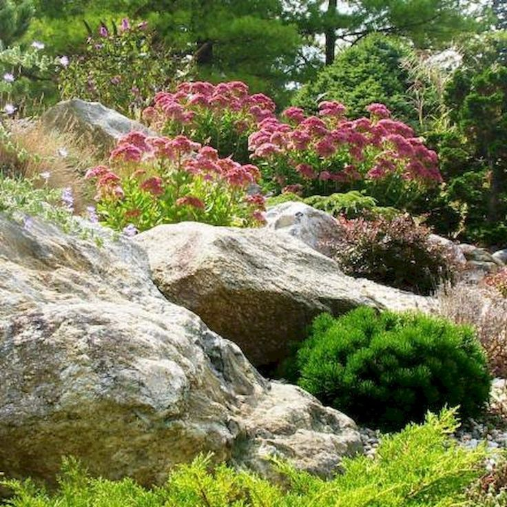 Pin by Marsha Humphreysbadgett on rock gardens Rock