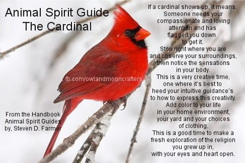 Animal Spirit Guide : The Cardinal