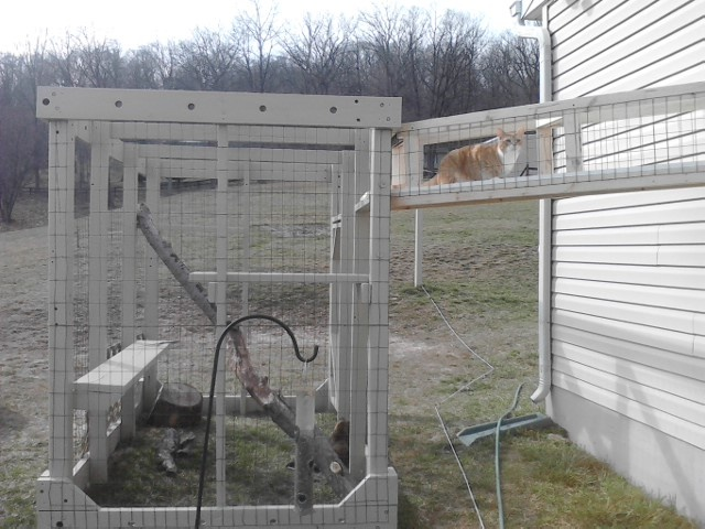Delightful The Catio Is Finished!! And Ernest T Is Trying Out The Breezeway :