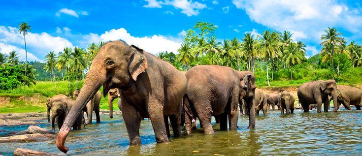 Youpiiii ! #Madagascar et le #SriLanka seront bientôt reliés par un vol direct. Ça vous plairait de découvrir ces îles en #circuit_combiné ? 🌴 🇲🇬🇱🇰