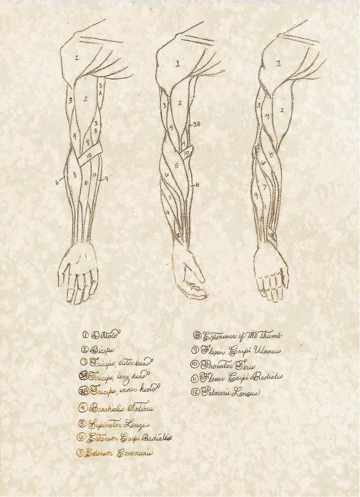 arm anatomy ref supinated and pronated