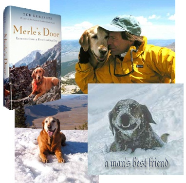 Merle\u0027s Door by Ted Karasote. such a great book for dog lovers. Also has great ideas for developing a well-trained dog & 32 best Indian Movies images on Pinterest | Indian movies Book ... Pezcame.Com