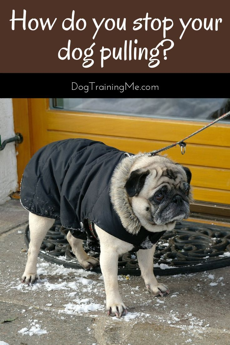 Wiggly Dog Collar Boots Dogfoodsehat Dogcostumesgoldenretriever Training Your Dog Dog Training Puppy Training