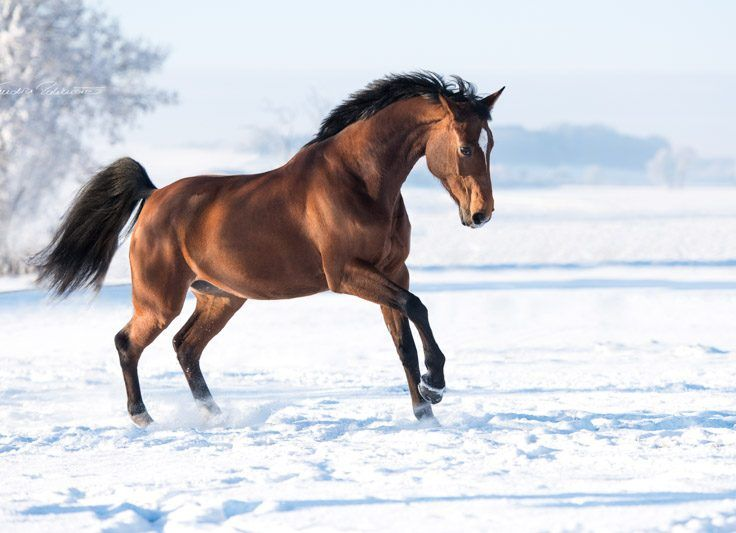 Lassen Sie uns gemeinsam Erinnerungen für die Ewigkeit schaffen!Zusammen lassen wir von ihrem Tier einmalige Bilder für die Ewigkeit entstehen. Viele Möglichkeiten stehen uns zur Verfügung um den Charakter ihres Pferdes einzufangen und natürliche Fotos…