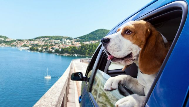 How to take your dog anywhere, with the help of 6 smart phone apps #dogs #pets #app