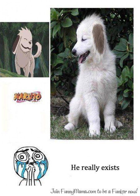 Anime/manga: Naruto (Shippuden) Character: Akamaru, Akamaru is real!!!
