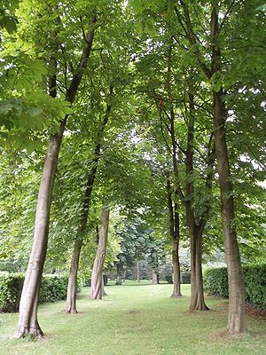 This is where we're marrying. Under the canopy of Whipsnade Tree Cathedral.