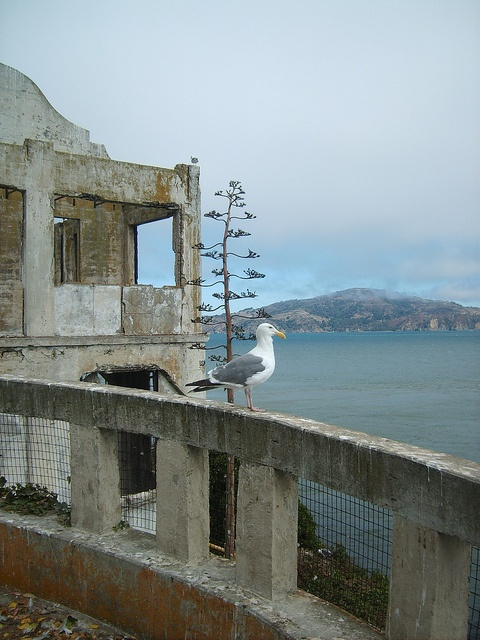"""Alcatraz, aka """"The Rock"""", was first established as a military fort in the 1850s by the US Army. During the Civil War, it became a military prison and in 1934, a federal maximum security prison for high-risk civilian prisoners. Because of the chilly San Francisco Bay waters that surround the island, prisoners thought twice about trying to escape. Out of 36 inmates attempting to escape, none succeeded. In 1963, due to the inability to restore & maintain it, the prison was closed."""
