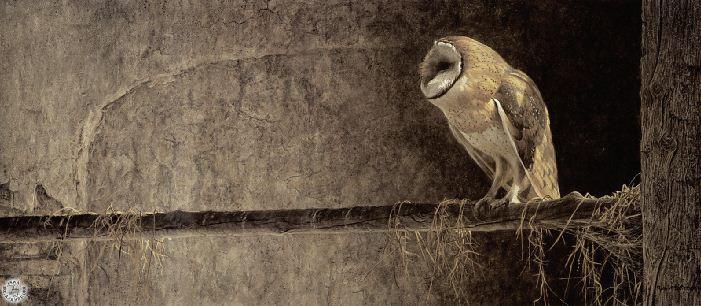 Robert Bateman. Анималистическая живопись. Сова