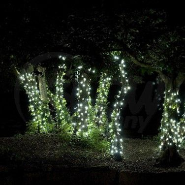 Solar powered fairy lights for the front trees for Christmas