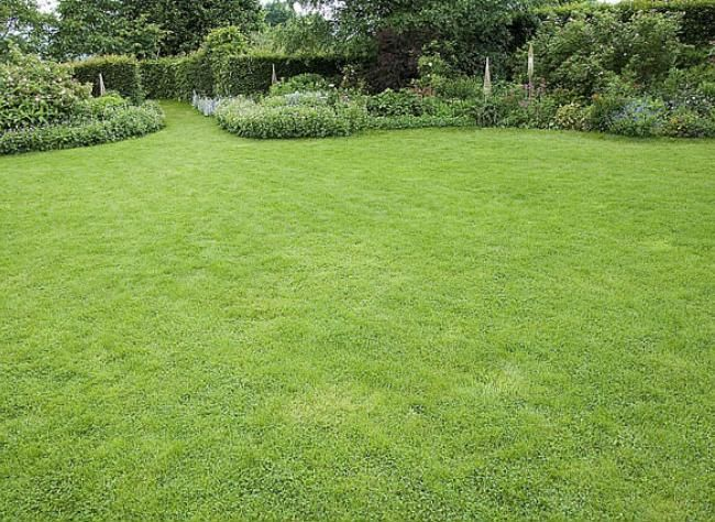 Que faire pour la pelouse et le bassin en avril ?