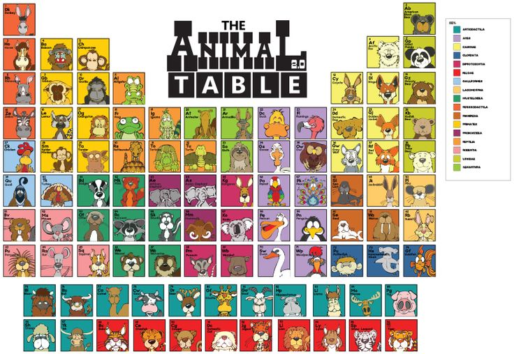 Pin By Angry Squirrel Studio On The Animal Table Animals