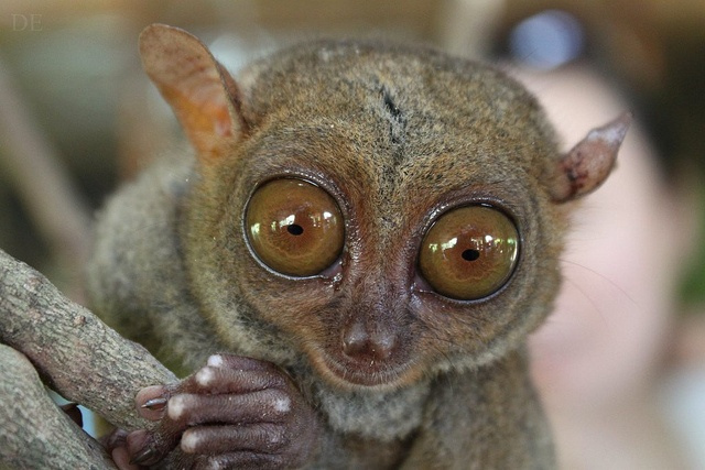 OMG: Interesting Photos, Fav Animal, Photos Tags