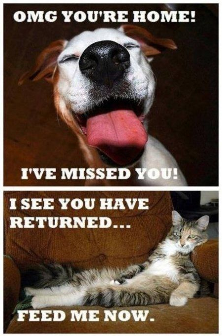 Funny Pictures 2014 Cats vs. Dogs MEME LOL