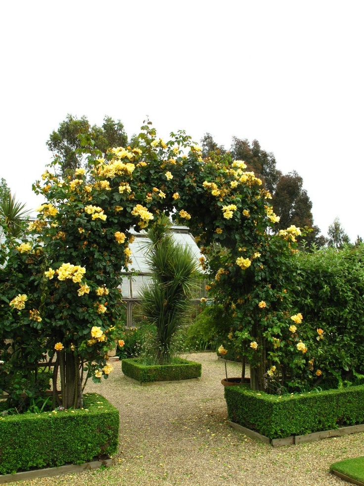 rose covered arch // ROCK ROSE: BLICKLING HALL, EAST RUSTON OLD VICARAGE