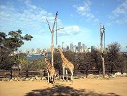 Sydney Sydney Sydney, Australia - #Travel Guide #Sydney