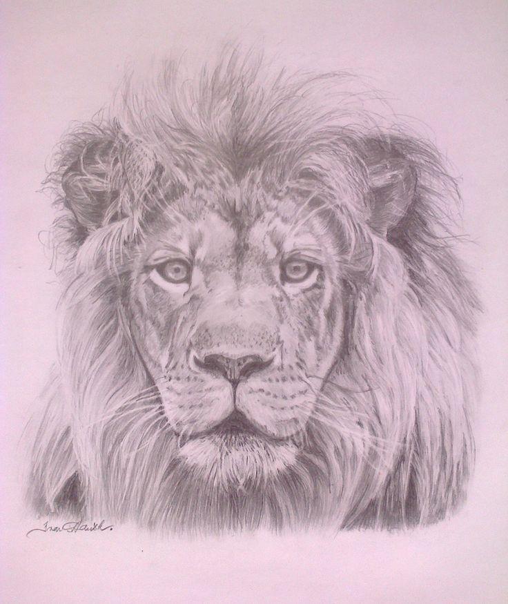 Lev - král zvířat