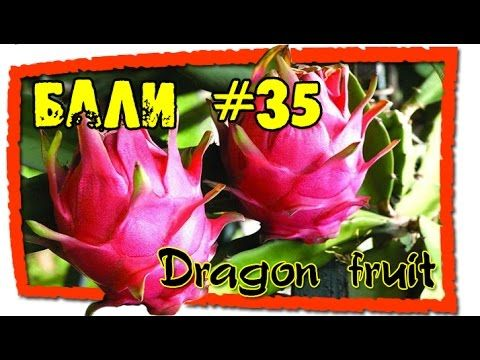 Бали #35 Драгонфрут (Питайа). Выбираем, очищаем, едим (Dragon fruit chos...