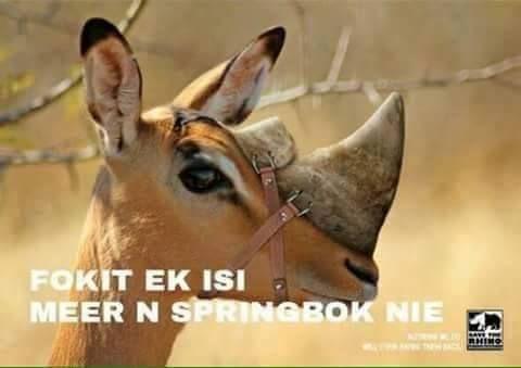 joke-rhino-bok