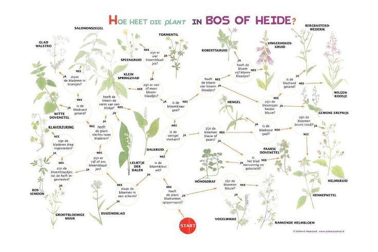 Zoekkaart Planten Bos of Heide