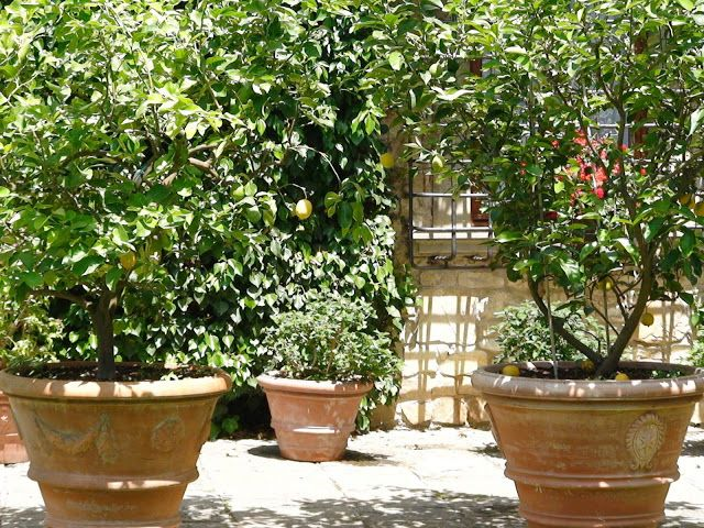 17 best images about wild bush on pinterest gardens for Pruning olive trees in pots