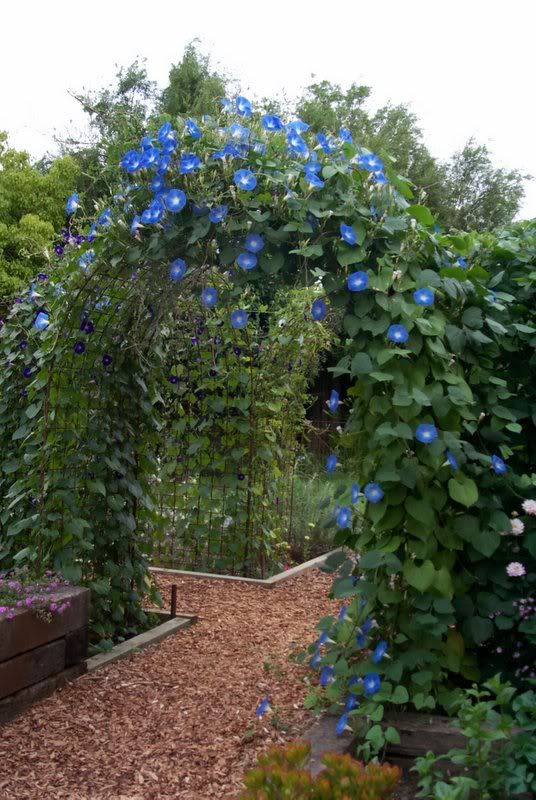 Diy Garden Arbor Gate WoodWorking Projects Plans