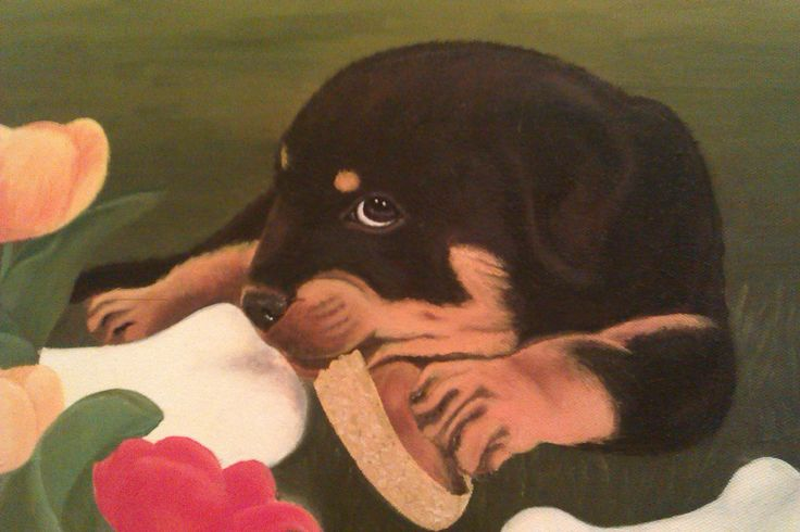 Rottweiler puppy, oil on canvas