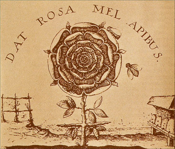"""The Alchemical Rose - Dat Rosa Mel Apibus: """"The rose gives the bees honey"""" after engraving by Johann Thedore deBry (d. 1598)"""