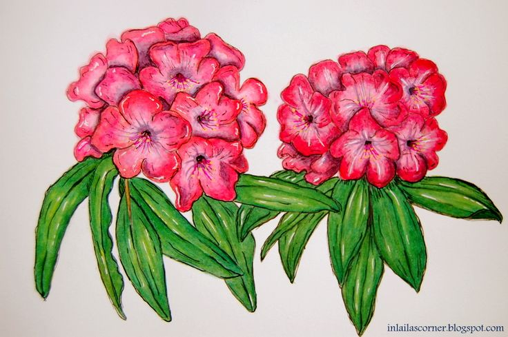 Flowers done in watercolors in my class Delicious Paint