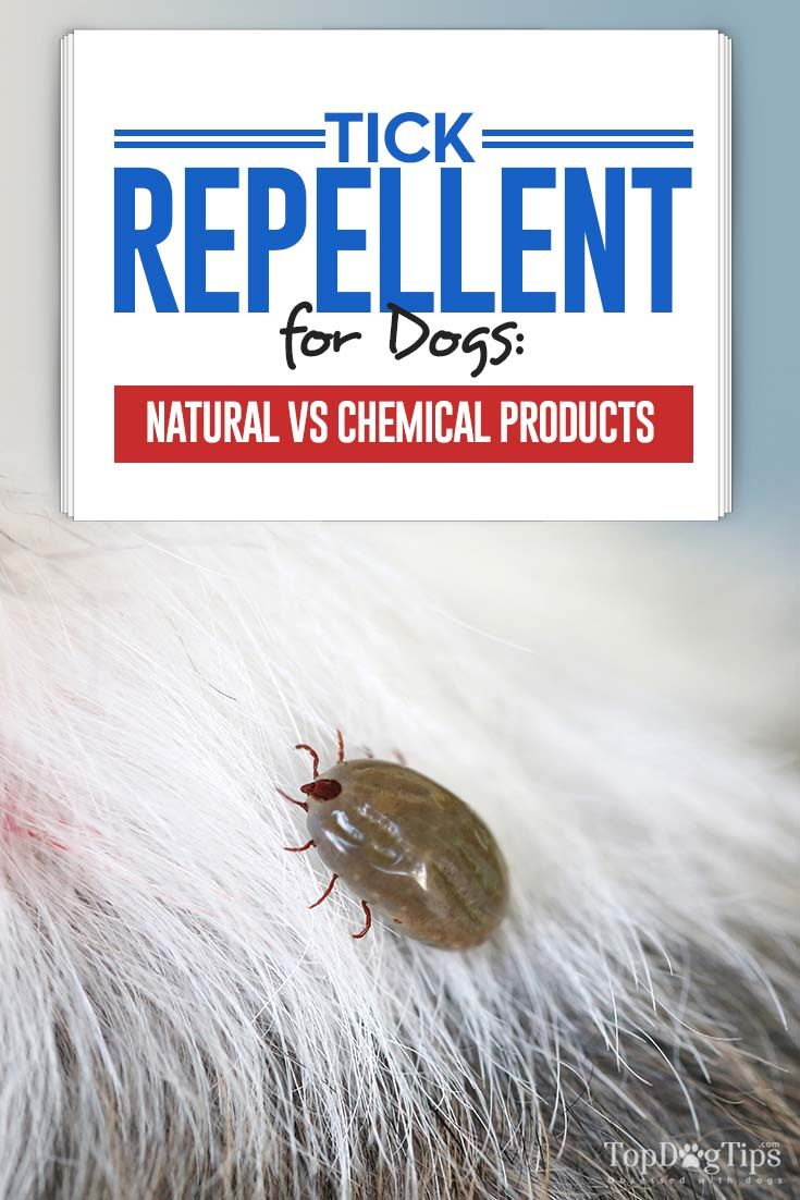 Tick Repellent for Dogs: Natural vs Chemical and What You Must Know