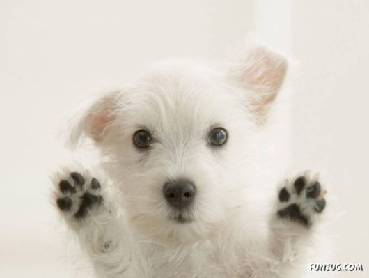 Black and white ~ so cute!!!