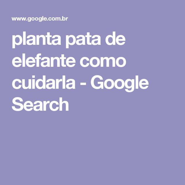 planta pata de elefante como cuidarla - Google Search