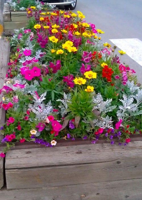 8 best images about wildflowers on pinterest gardens for Wildflower garden designs