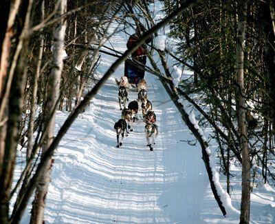 Iditarod Trail, Alaska.
