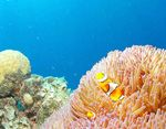 Oh the great barrier reef! I was there in 2006 and it was wonderful! I would love to go back! :D