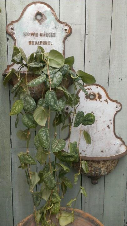 Vintage wall plant holders
