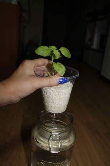 Mason Jar Herb Garden Indoor Diy