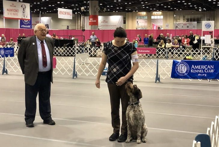 Cgc Me Jubilee The German Wirehaired Pointer Mixes Service