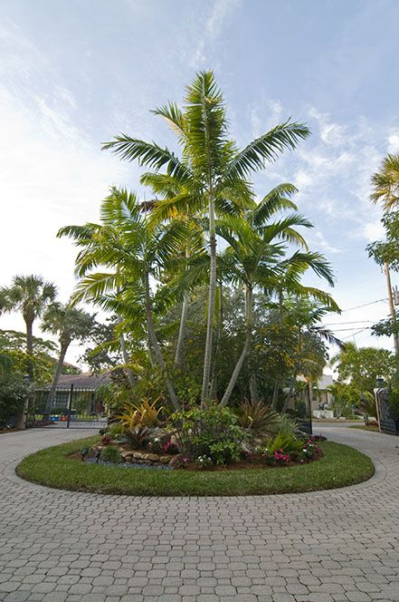 Tropical Palm Tree Landscape | Florida Landscape with Tropical Palm Trees in Sarasota » Landscaping ...