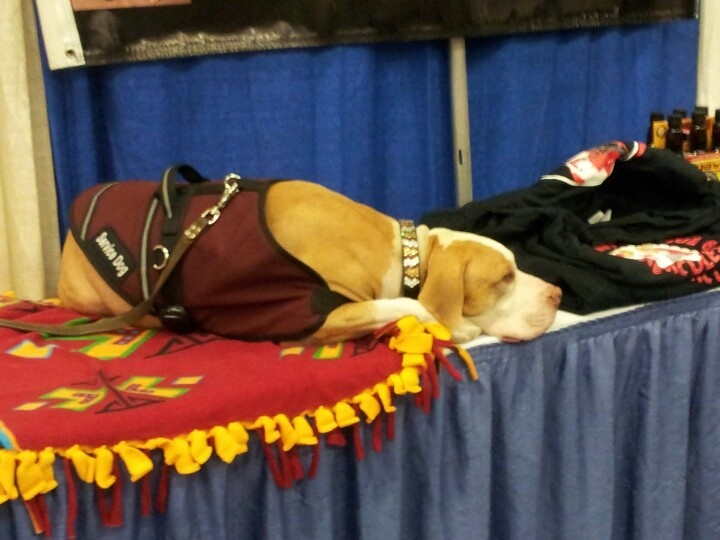 Hercules with Shorty's Rescue @ the South Florida Fairgrounds!