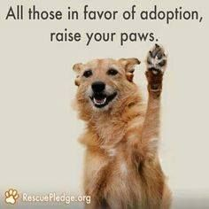 Raise your paws! HELP, SAVE, RESCUE and ADOPT.....please