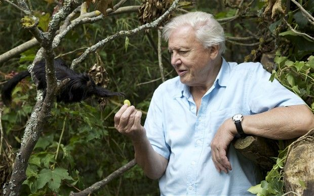 Sir David Attenborough. I don't think I need to say anything else.