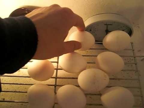 Brutgerät Inkubator Brutmaschine Brutapparat Eigenbau Bauanleitung homemade egg incubator - YouTube