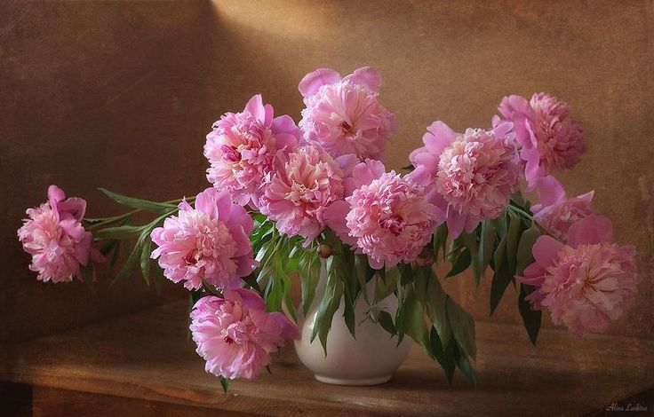 still life with peonies photography - Google Search