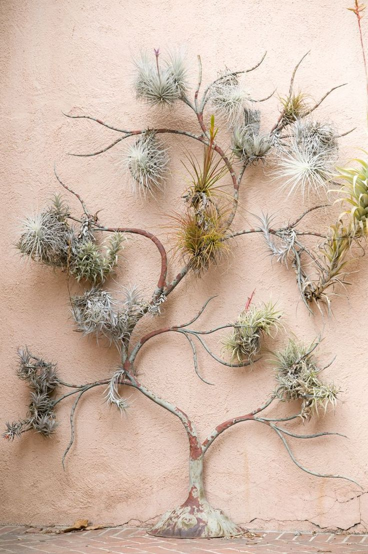 Airplant tree
